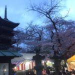 上野公園の桜 花見で驚愕
