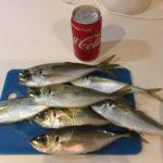 東京湾で船に乗ってアジ釣りをしてみた結果……